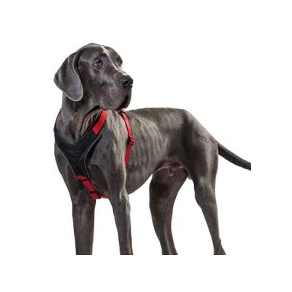 Pettorina Neoprene - Hunter